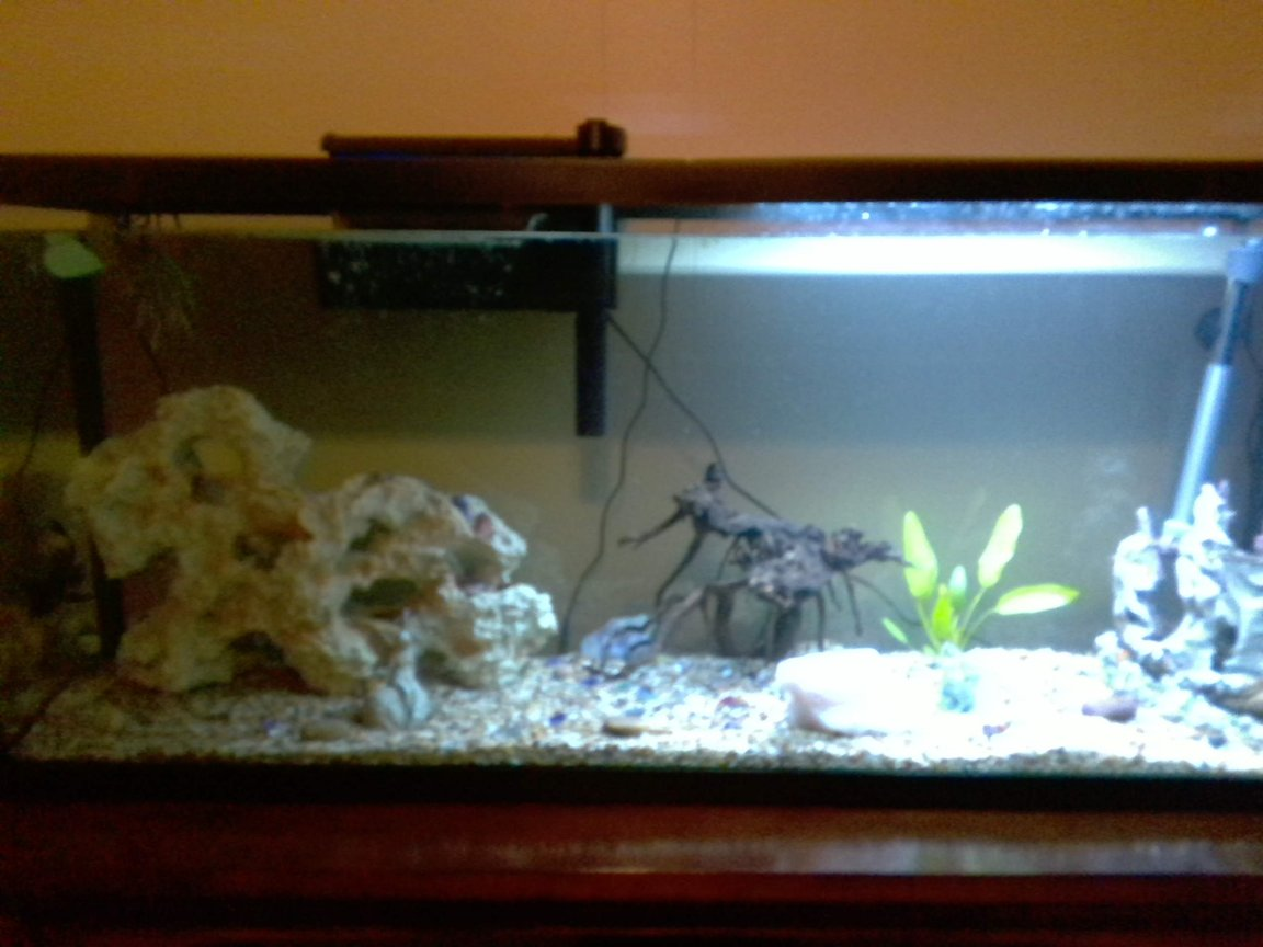 55 gallons planted tank (mostly live plants and fish) - newly set up tank with 1 dojo loach, 1 pleco, 2 neon tetras (had 5, 3 died) and an oriental sword plant.