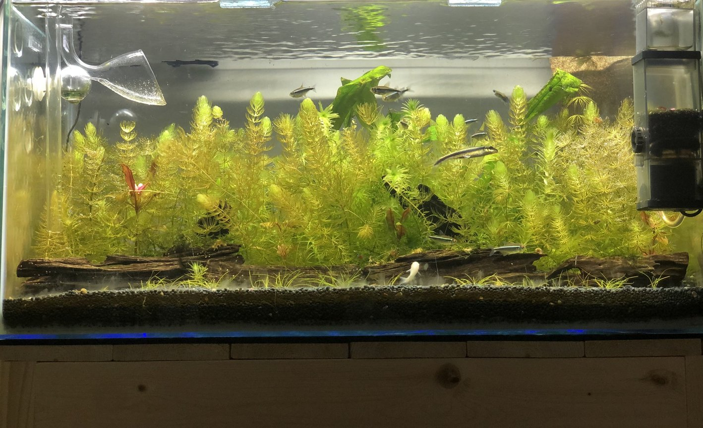 15 gallons planted tank (mostly live plants and fish) - Peaceful