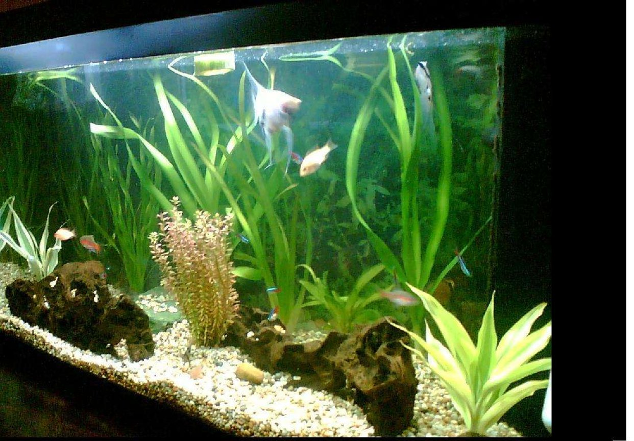 22 gallons planted tank (mostly live plants and fish) - Sometimes is hard work but most of the times its all fun