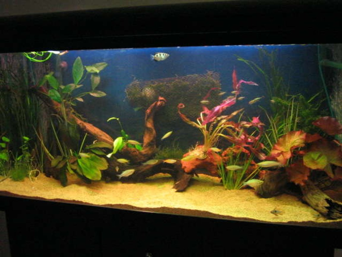 70 gallons planted tank (mostly live plants and fish) - natural as possible