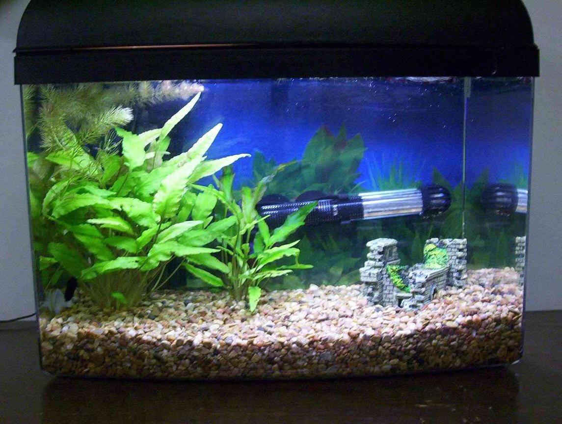 29 gallons planted tank (mostly live plants and fish) - 5 Gallon Betta Tank with 2 cryptos