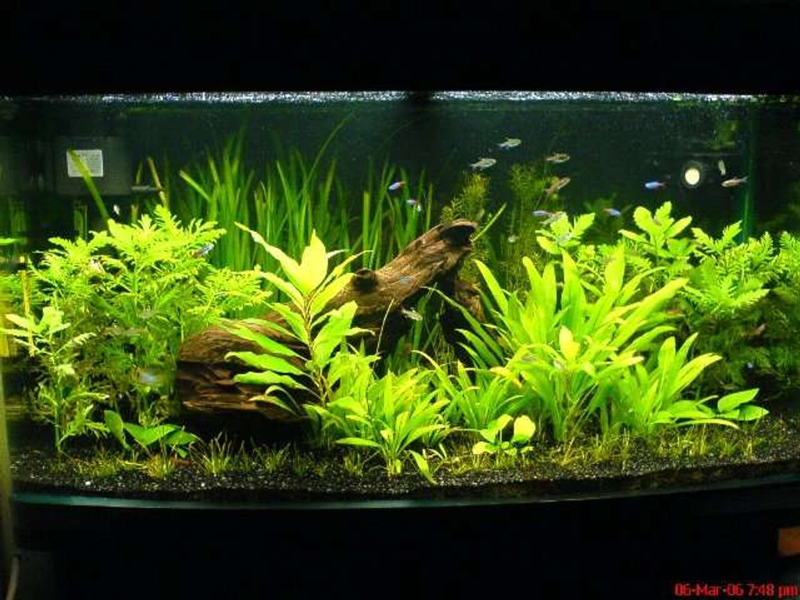 55 gallons planted tank (mostly live plants and fish) - Full shot