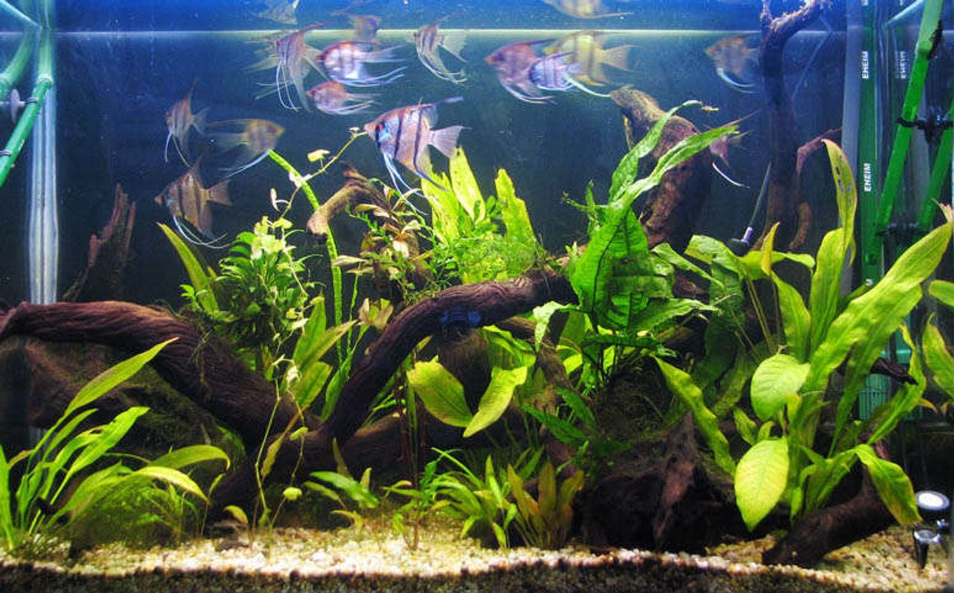 planted tank (mostly live plants and fish) - 3ftx2ft high planted tank. Running Eheim 2215 and 2217 with pressurized CO2.