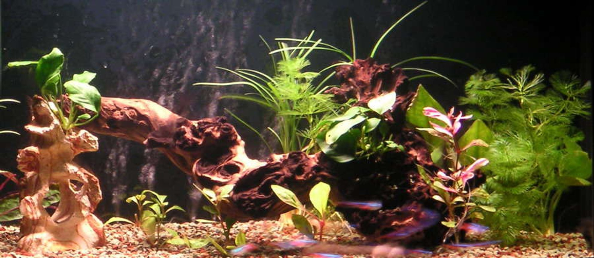 20 gallons planted tank (mostly live plants and fish) - 65*32*37cm fresh water tank