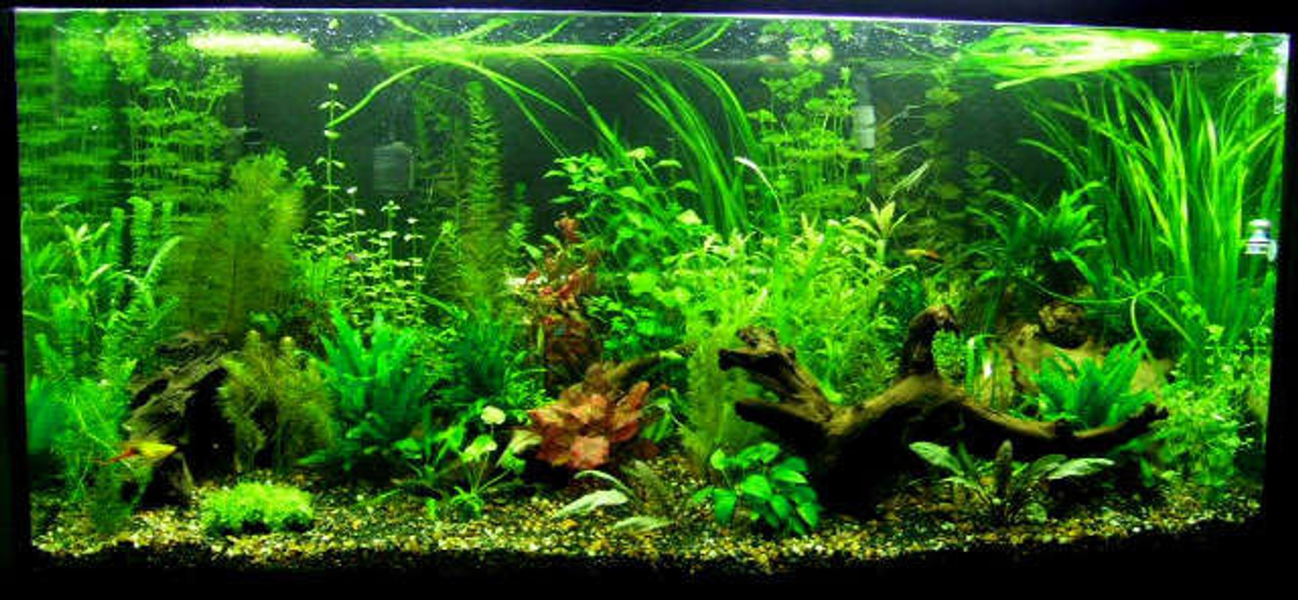 90 gallons planted tank (mostly live plants and fish) - 90 gallon planted.