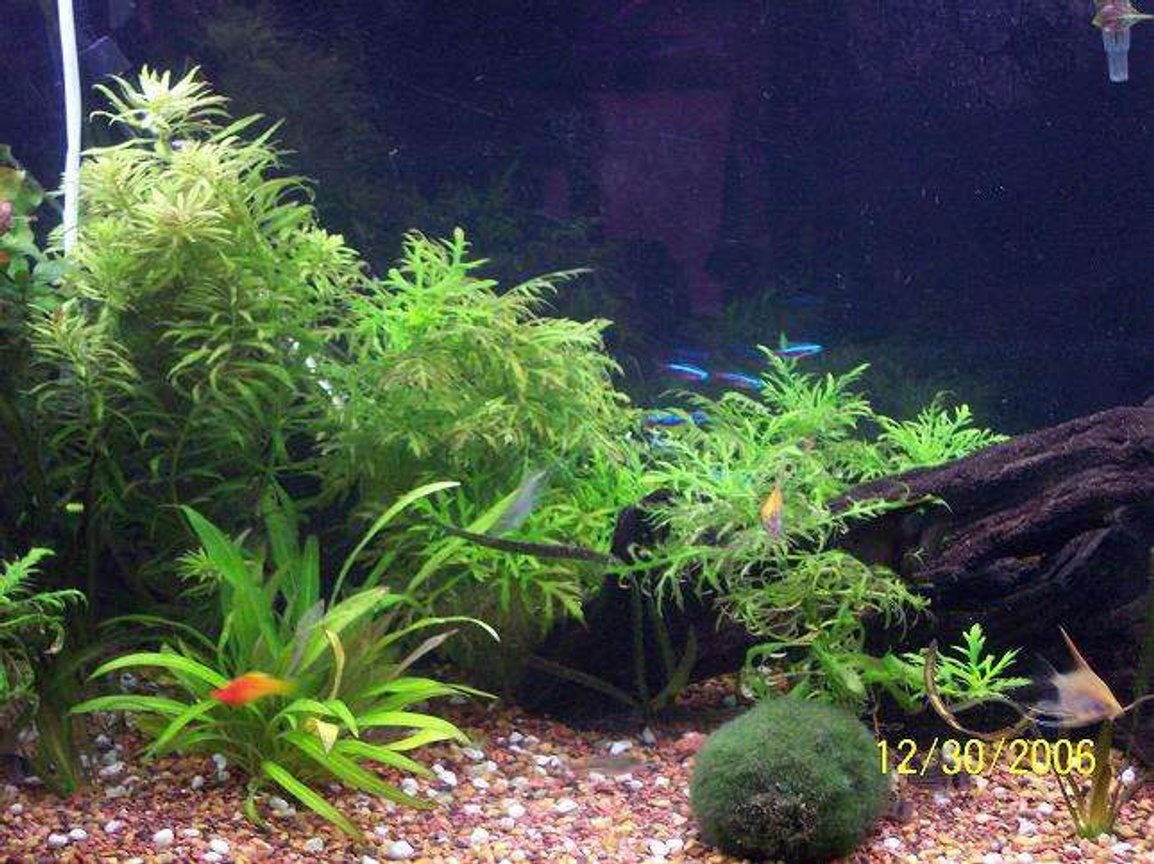 40 gallons planted tank (mostly live plants and fish) - this is a much better picture of the new tank.