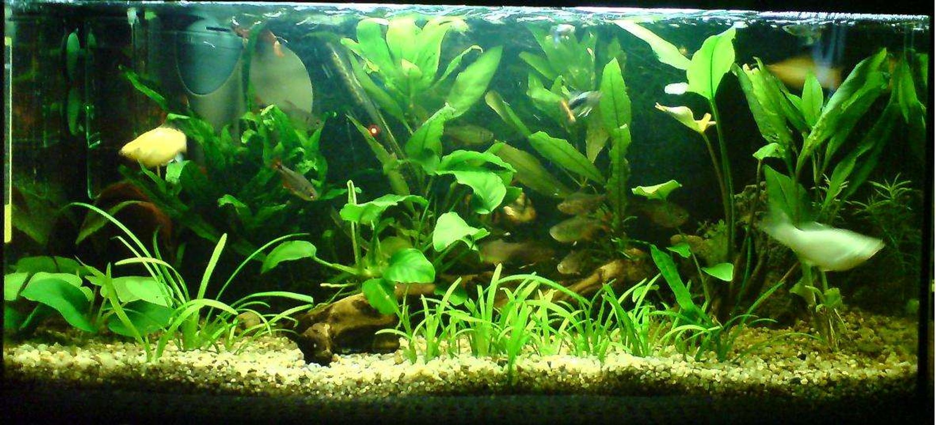 15 gallons planted tank (mostly live plants and fish) - my aqua