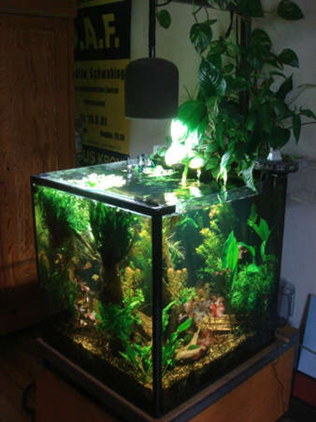 100 gallons planted tank (mostly live plants and fish) - complete