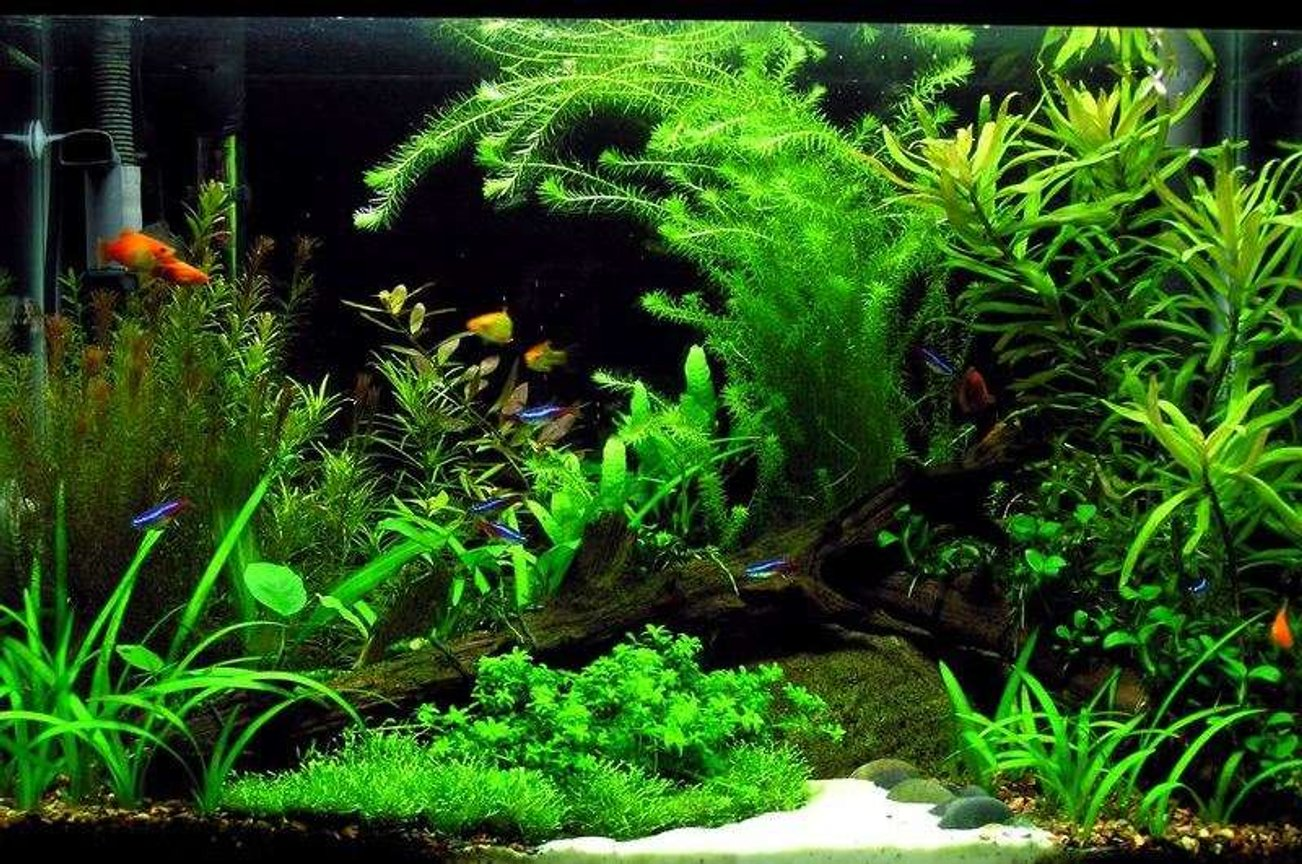 20 gallons planted tank (mostly live plants and fish) - Underwater Escape...