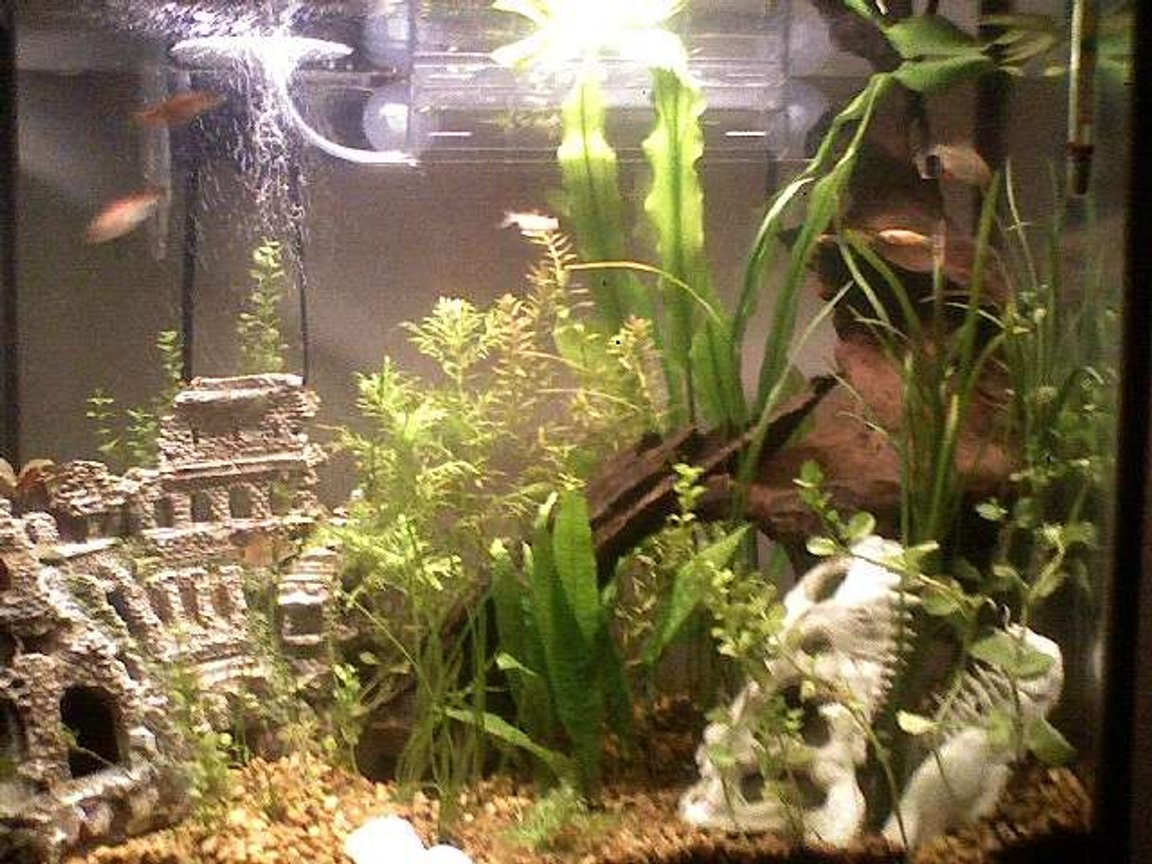 30 gallons planted tank (mostly live plants and fish) - 30g