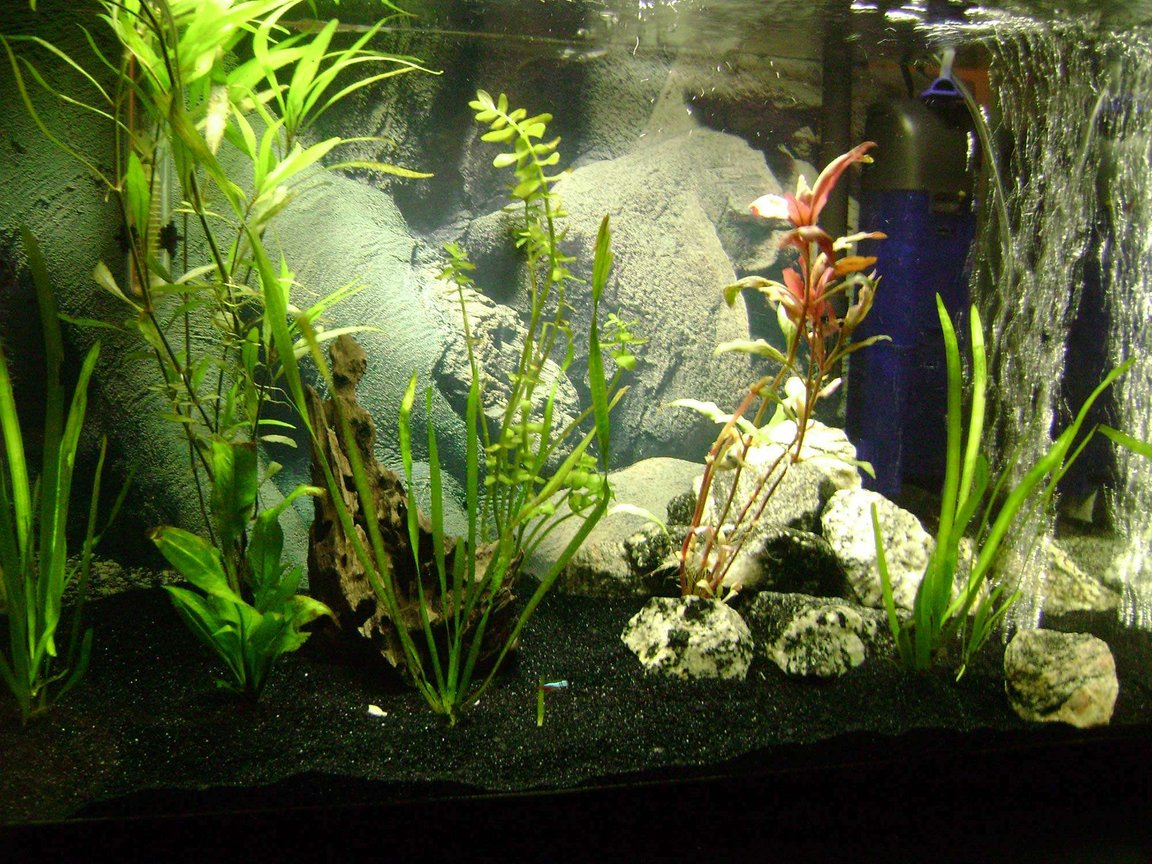 30 gallons planted tank (mostly live plants and fish) - Various Plants, 2 Neon Tetras