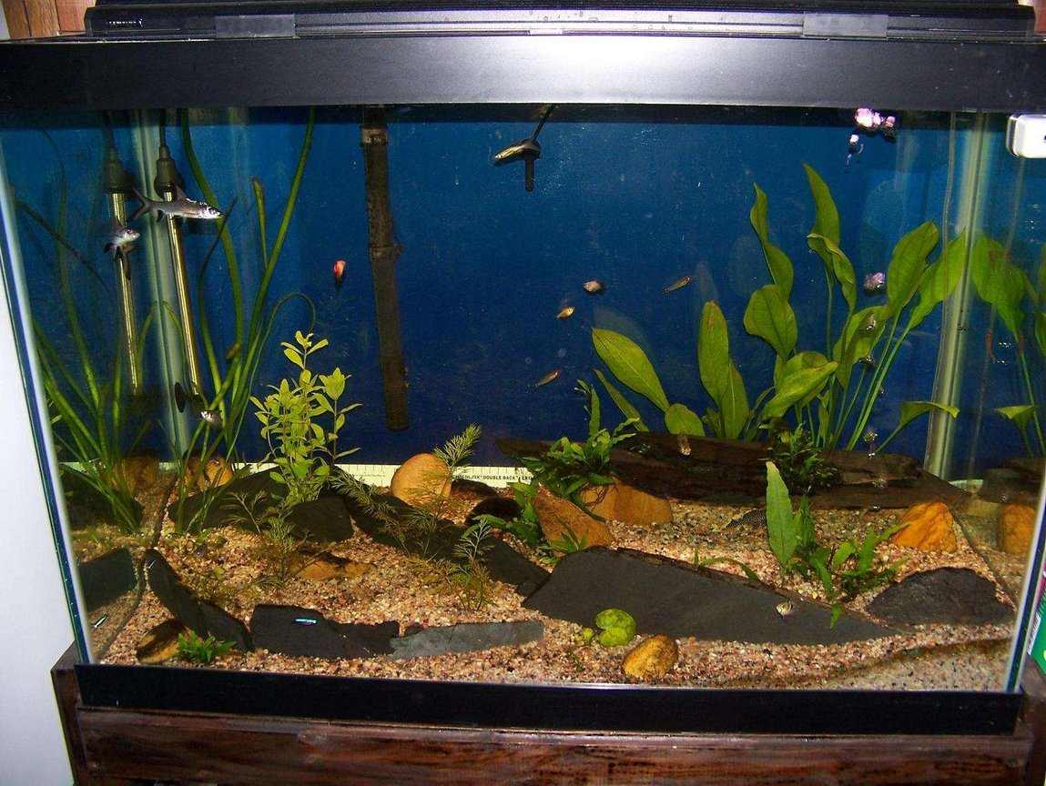 65 gallons planted tank (mostly live plants and fish) - 65 Gallon semi planted with slate stone work