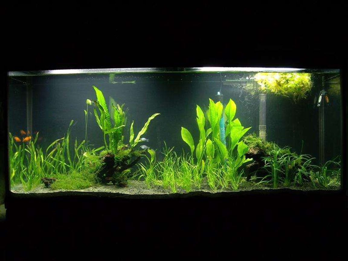 20 gallons planted tank (mostly live plants and fish) - 55 gallon tank