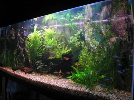 67 gallons planted tank (mostly live plants and fish) - Planted tank