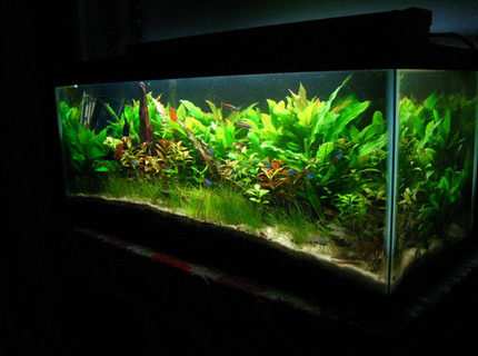Rated #5: 20 Gallons Planted Tank - 20 gal