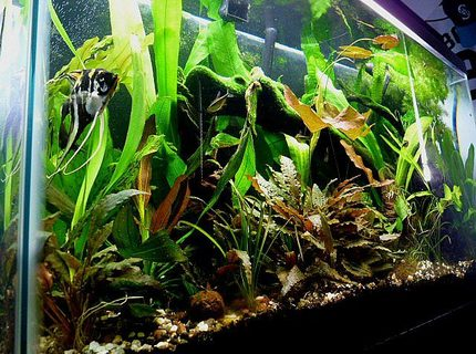 38 gallons planted tank (mostly live plants and fish) - My 38 gallon all-glass planted tank. It's about 2 years old. I added a Co2 system three months ago. Plants are going crazy.
