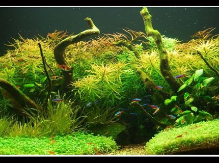 Rated #2: 45 Gallons Planted Tank - In Nature's Glory