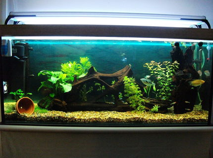 50 gallons planted tank (mostly live plants and fish) - 4ft fresh water tropical planted tank.