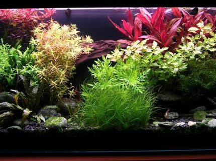 Rated #10: 36 Gallons Planted Tank - Colourfull water garden