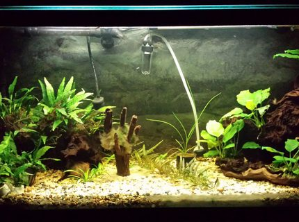 35 gallons planted tank (mostly live plants and fish) - Updated tank picture.