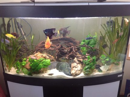 44 gallons planted tank (mostly live plants and fish) - 44 gallons