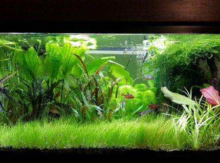 45 gallons planted tank (mostly live plants and fish) - My Planted Tank
