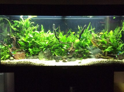 45 gallons planted tank (mostly live plants and fish) - My tank