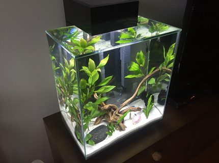 12 gallons planted tank (mostly live plants and fish) - Fluval Edge 12 galon. Prishtina- Kosovo