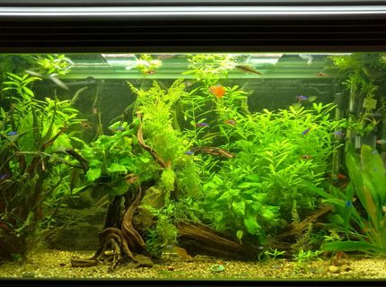 Rated #5: 11 Gallons Planted Tank - All plants live Co2 used