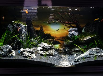 20 gallons planted tank (mostly live plants and fish) - Planted guppy tank