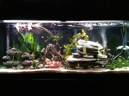 Switched my 55 gallon community tank to a low techlow light live mostly planted tank All plants are real except tall green ones in the back Plants include java fern 2 varieties and moss anubias 2 varieties water lily aponogeton and water onion