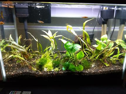 20 gallons planted tank (mostly live plants and fish) - Full brightness