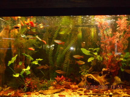 65 gallons planted tank (mostly live plants and fish) - 65gallon community tank