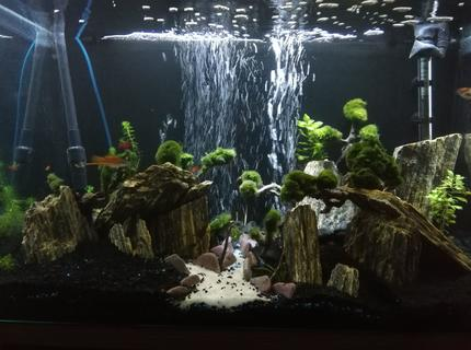 35 gallons planted tank (mostly live plants and fish) - 35 gallon easy maintenance Moss ball and slate rock decorated fish tank easy care great to look at. Still a work in progress, 