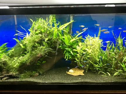 Rated #8: 55 Gallons Planted Tank - 55 Gallon Planted