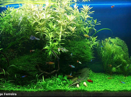 Rated #8: 53 Gallons Planted Tank - My first big planted freshwater aquarium.