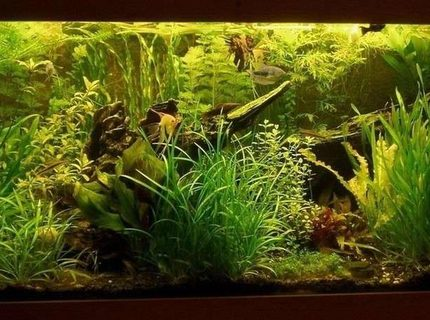 Rated #9: Planted Tank - Aquarium 150 x 60 x 50 ///