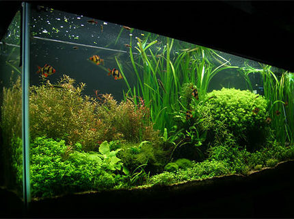 Rated #1: 55 Gallons Planted Tank - 55 gallon. Carbo Plus CO2. 220 watts 5500K power compact fluorescent lighting.
