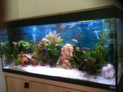 50 gallons planted tank (mostly live plants and fish) - sorry for poor quality!  I will try and upload more soon....