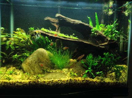 37 gallons planted tank (mostly live plants and fish) - Second planted tank attempt
