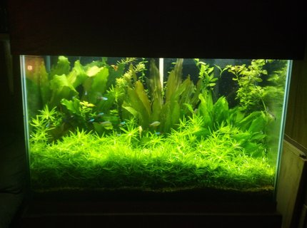 70 gallons planted tank (mostly live plants and fish) - 70 gal