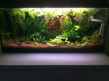 20 gallons planted tank (mostly live plants and fish) - Update of my aquarium.