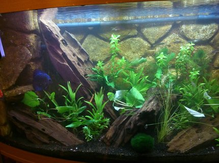130 gallons planted tank (mostly live plants and fish) - Old Tank
