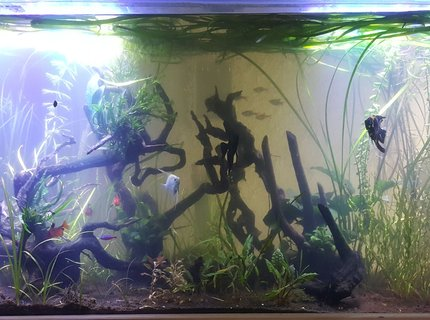 100 Gallons Fish Tanks And Aquariums | RateMyFishTank com