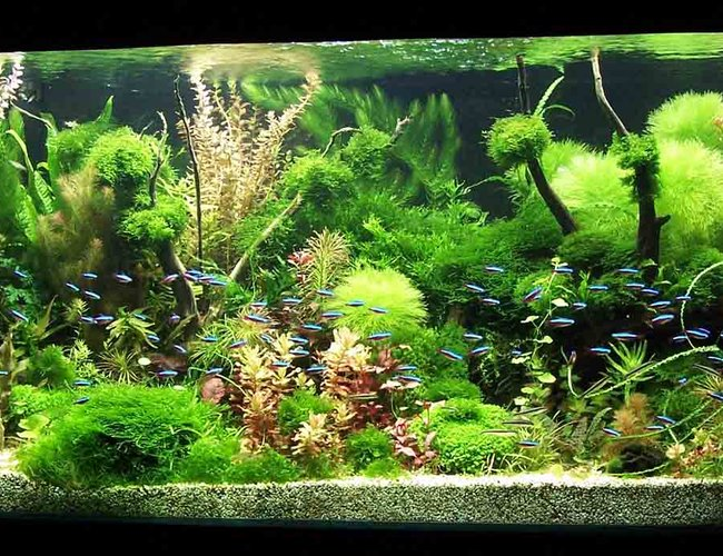 122 gallons planted tank (mostly live plants and fish) - Grove
