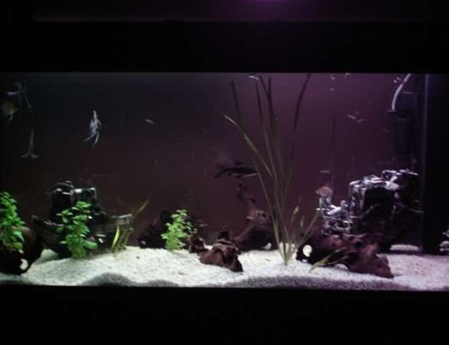 211 gallons planted tank (mostly live plants and fish) - Bad pic, will take a better one soon.