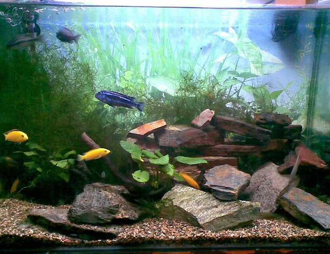 45 gallons planted tank (mostly live plants and fish) - This is the latest version of our tank.