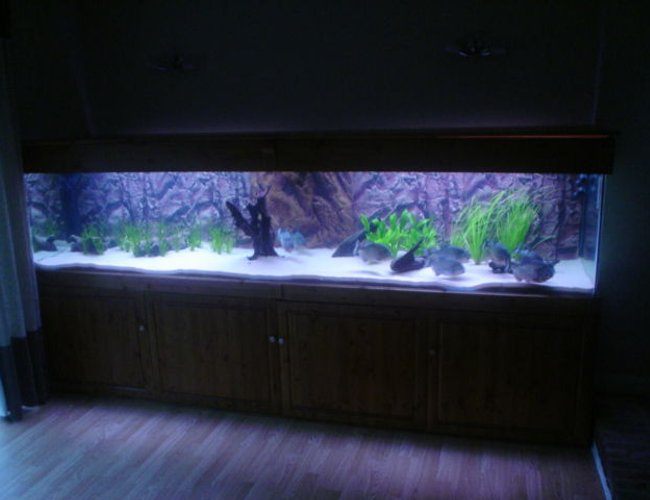 "370 gallons planted tank (mostly live plants and fish) - 370 gallon tank, 118"" length x 30"" depth x 24"" height"