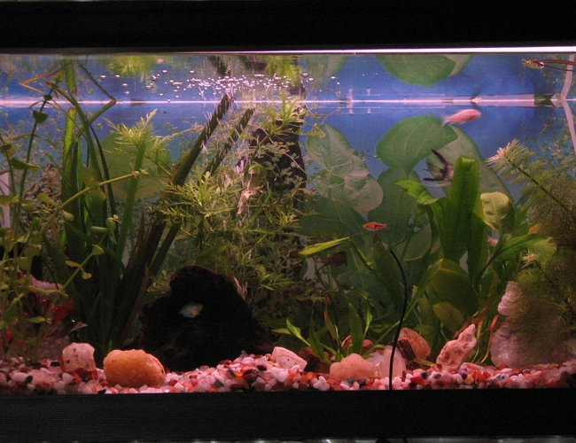 12 gallons planted tank (mostly live plants and fish) - I loooooove dis.....