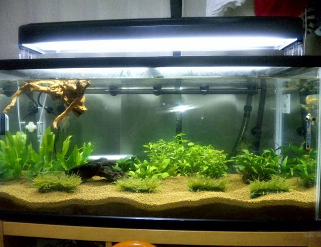 45 gallons planted tank (mostly live plants and fish) - OUR FIRST SERIUOS TANK...